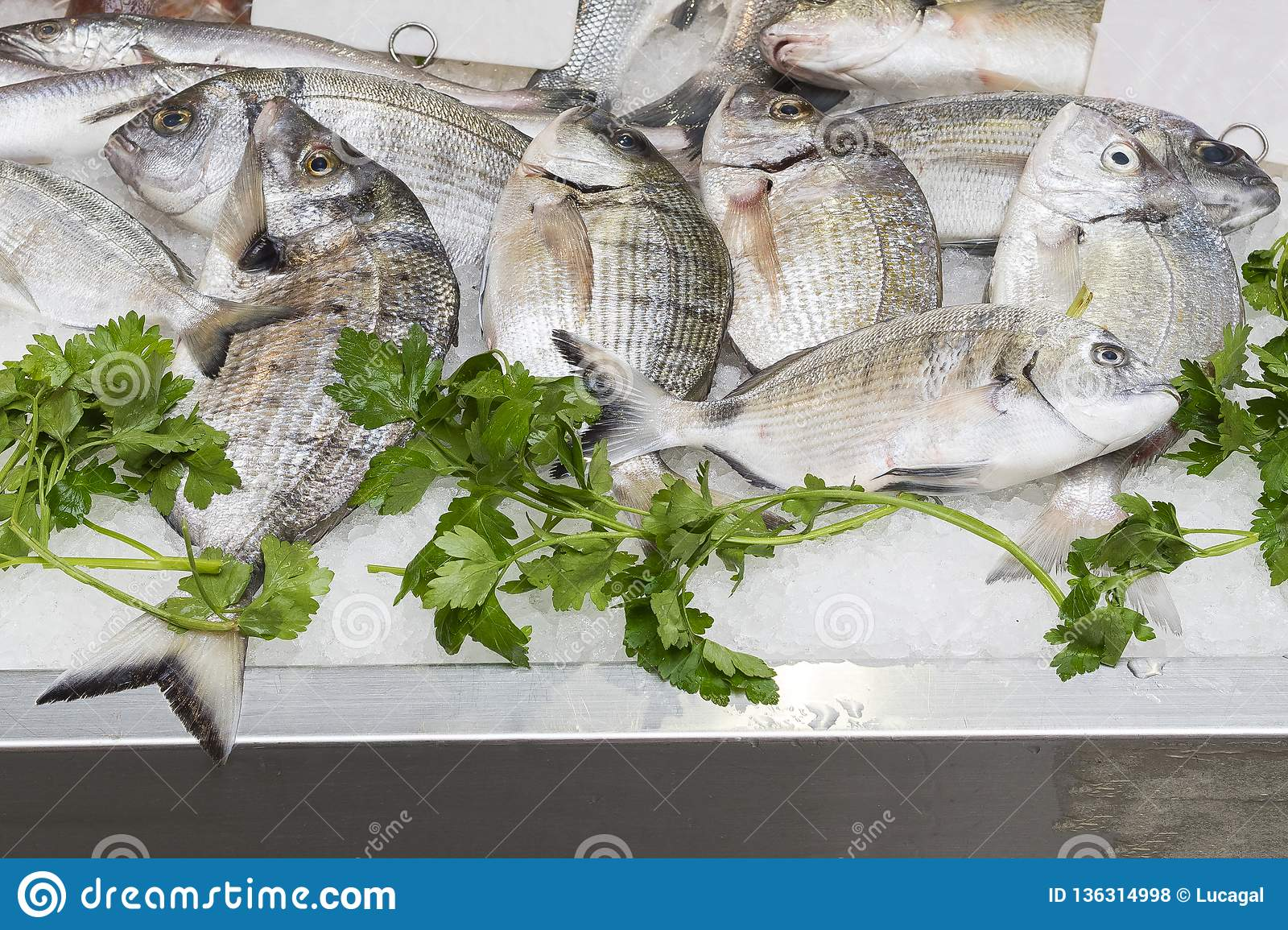 Fresh Sargo Or White Seabream Diplodus Sargus At A Fish ... on volcano map, mariana trench map, peninsula map, sailing map, massif map, sound map, channel map, ocean map, estuary map, coral reef map, seabed map, mediterranean map, caribbean map, gulf map, glacier map, bay map, south east asia map, world map, lagoon map, lake map,