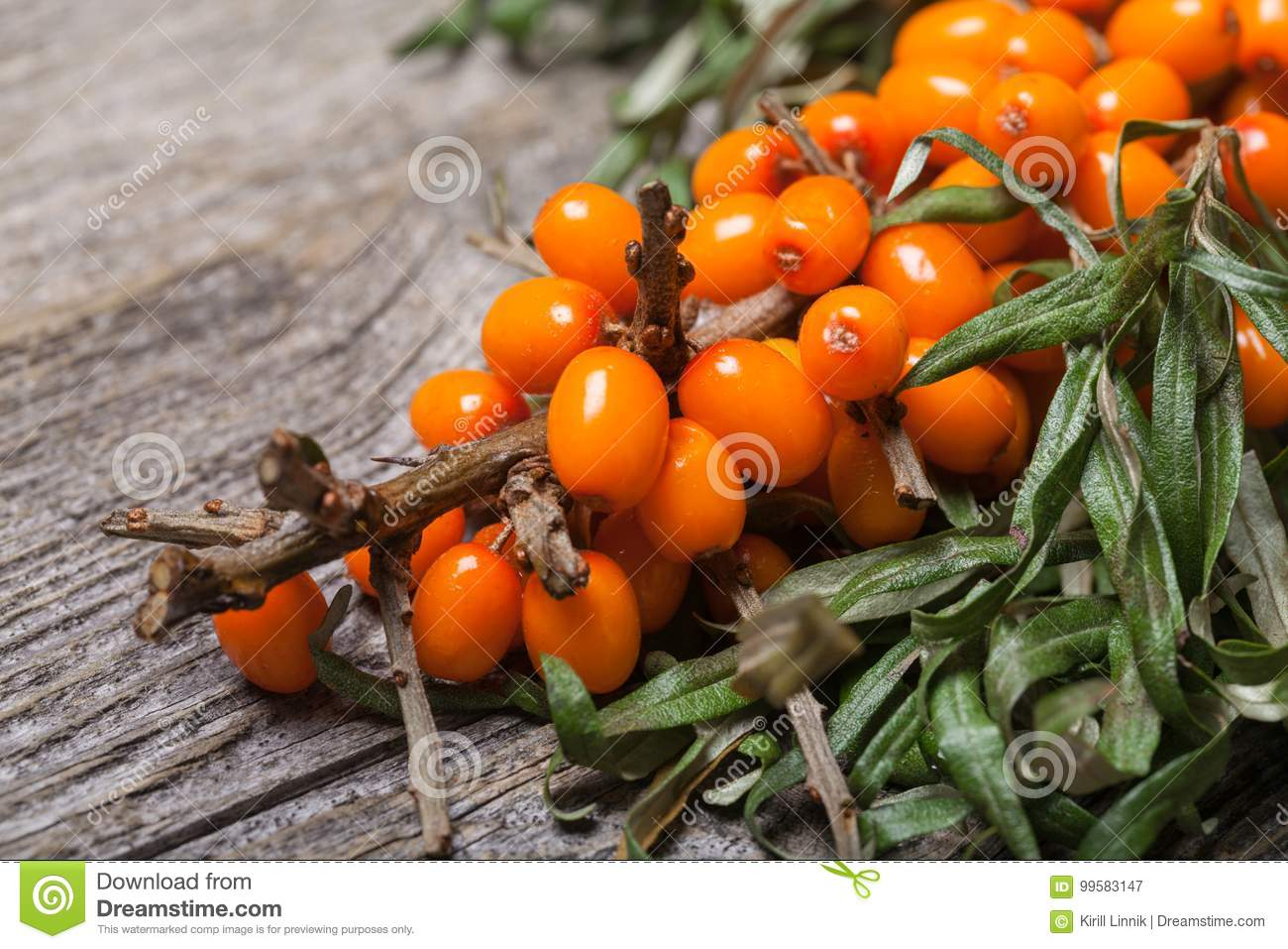 Download Fresh Seabuckthorn On The Table Stock Image - Image of green, macro: 99583147