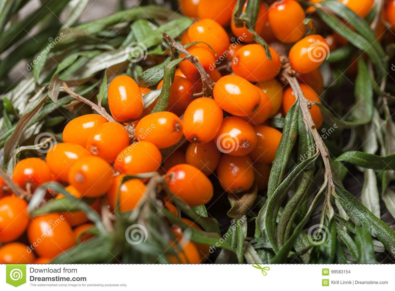 Download Fresh Seabuckthorn On The Table Stock Photo - Image of food, health: 99583154