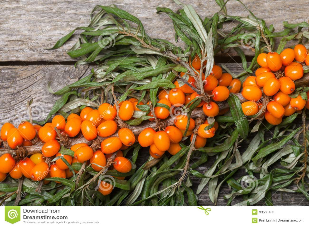 Download Fresh Seabuckthorn On The Table Stock Image - Image of berry, health: 99583183