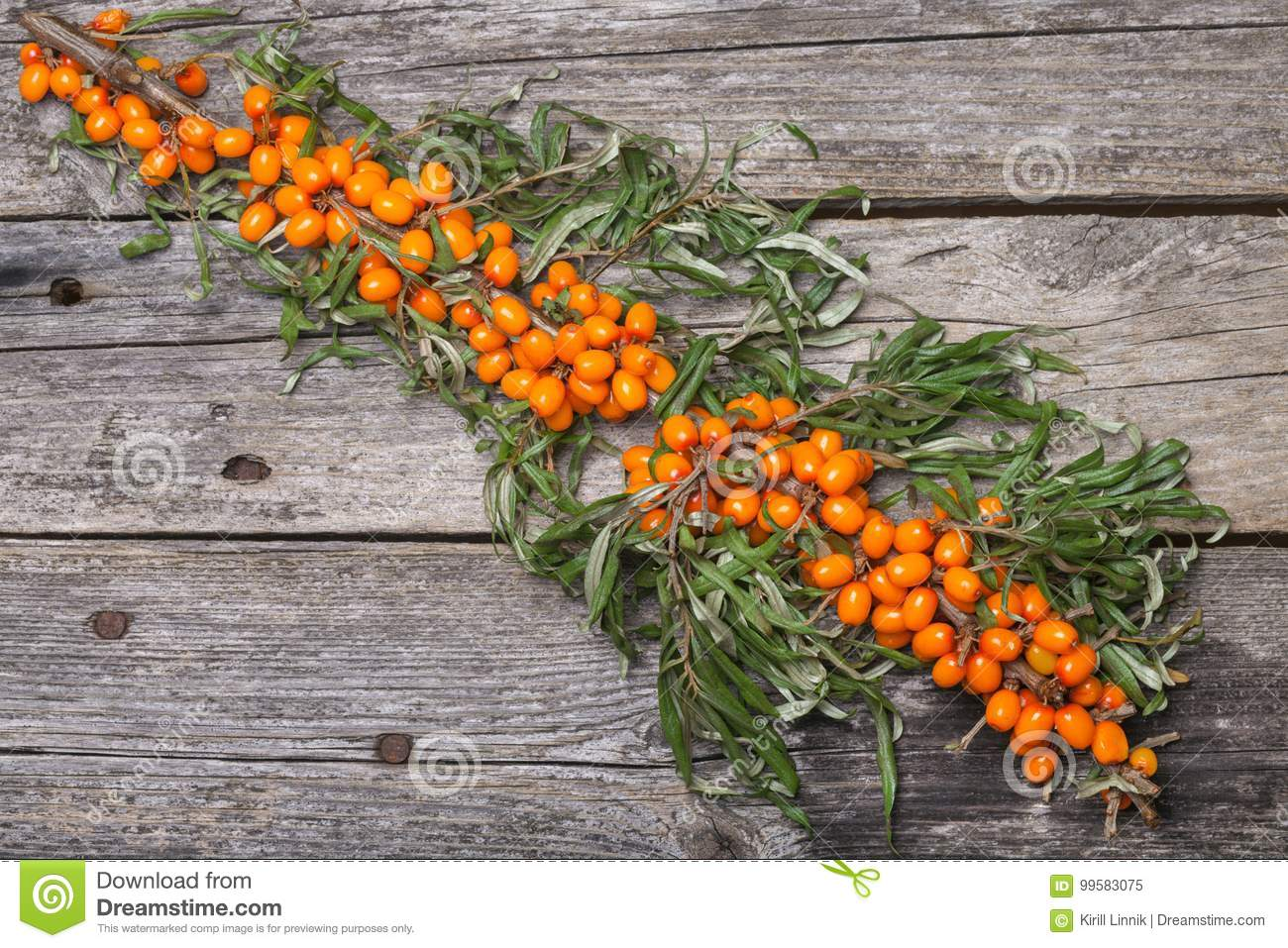 Download Fresh Seabuckthorn On The Table Stock Image - Image of mature, harvest: 99583075