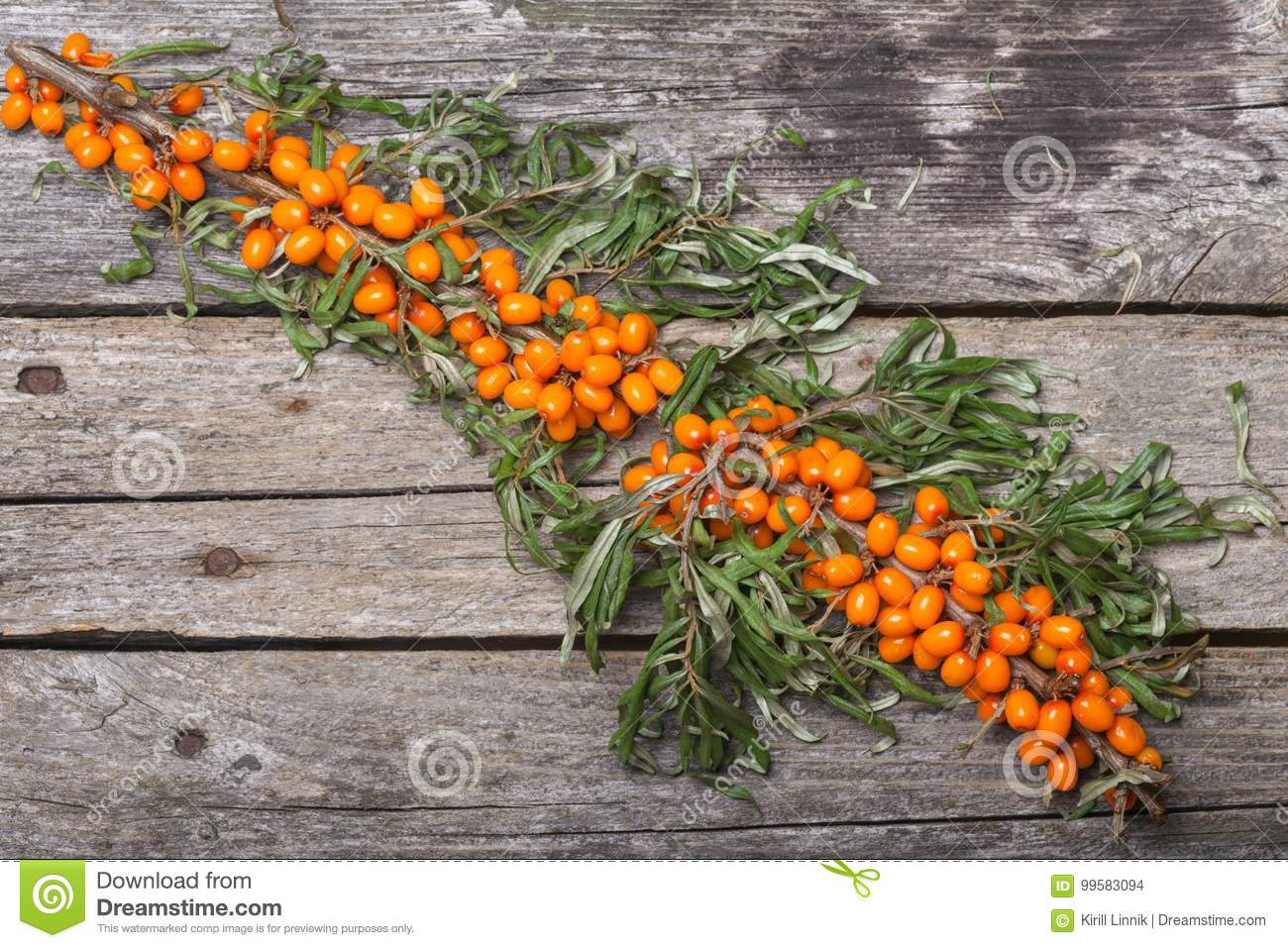 Download Fresh Seabuckthorn On The Table Stock Photo - Image of juicy, herbal: 99583094