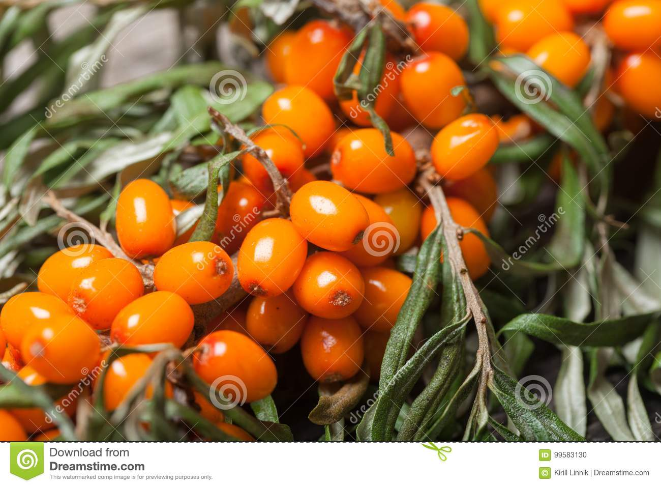 Download Fresh Seabuckthorn On The Table Stock Photo - Image of background, fruit: 99583130