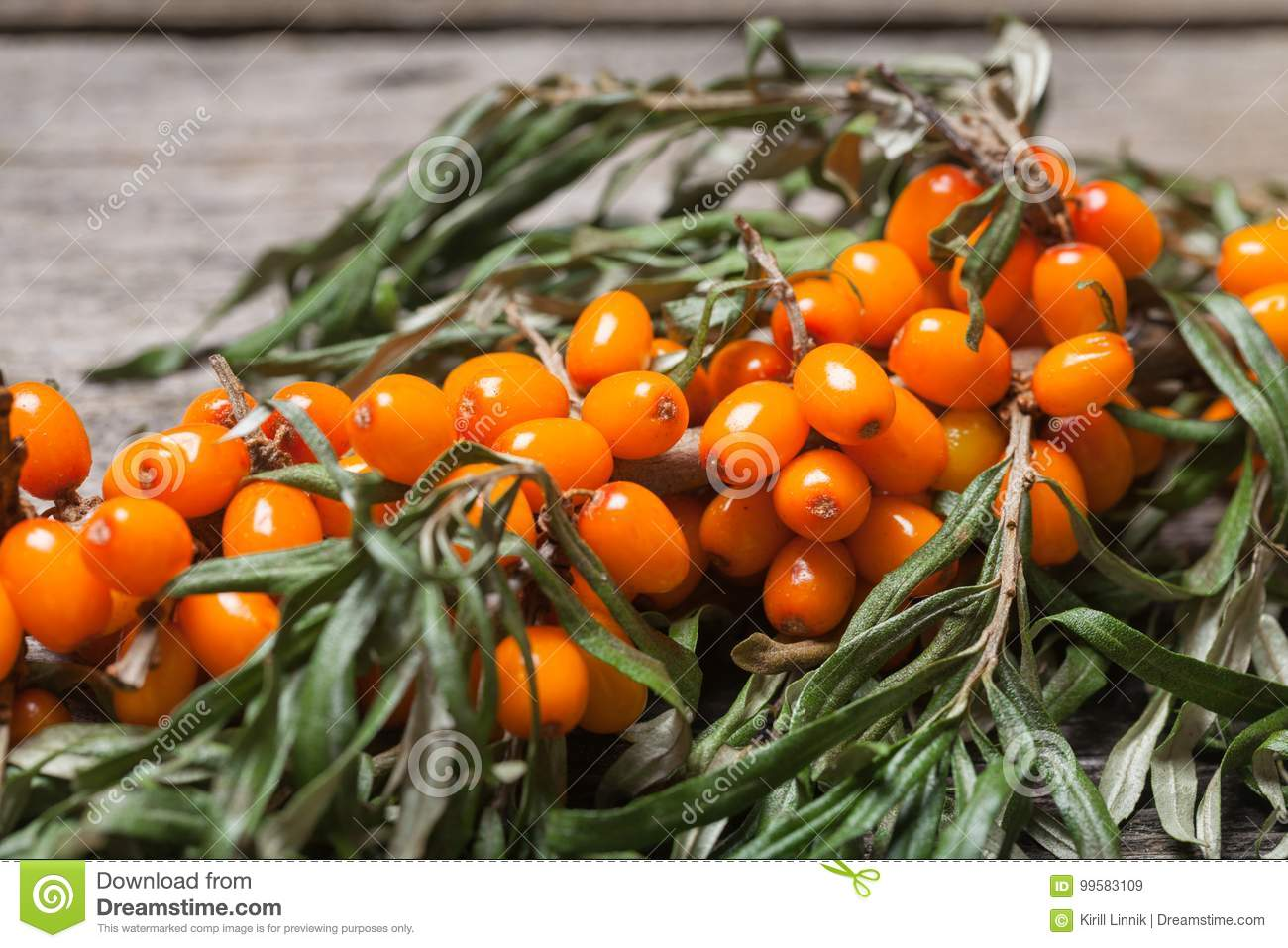 Download Fresh Seabuckthorn On The Table Stock Image - Image of healthy, many: 99583109