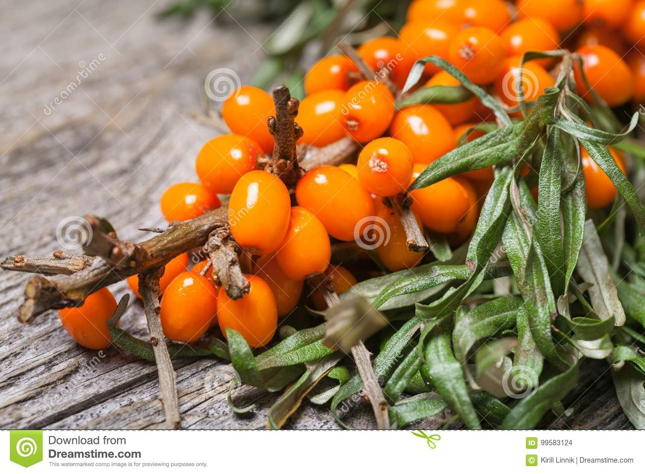 Download Fresh Seabuckthorn On The Table Stock Photo - Image of abundance, harvest: 99583124
