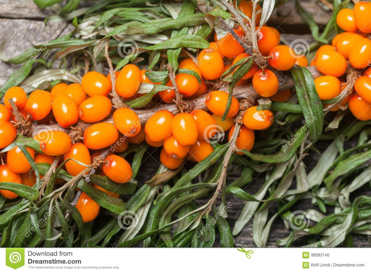 Download Fresh Seabuckthorn On The Table Stock Photo - Image of healthy, berry: 99583140