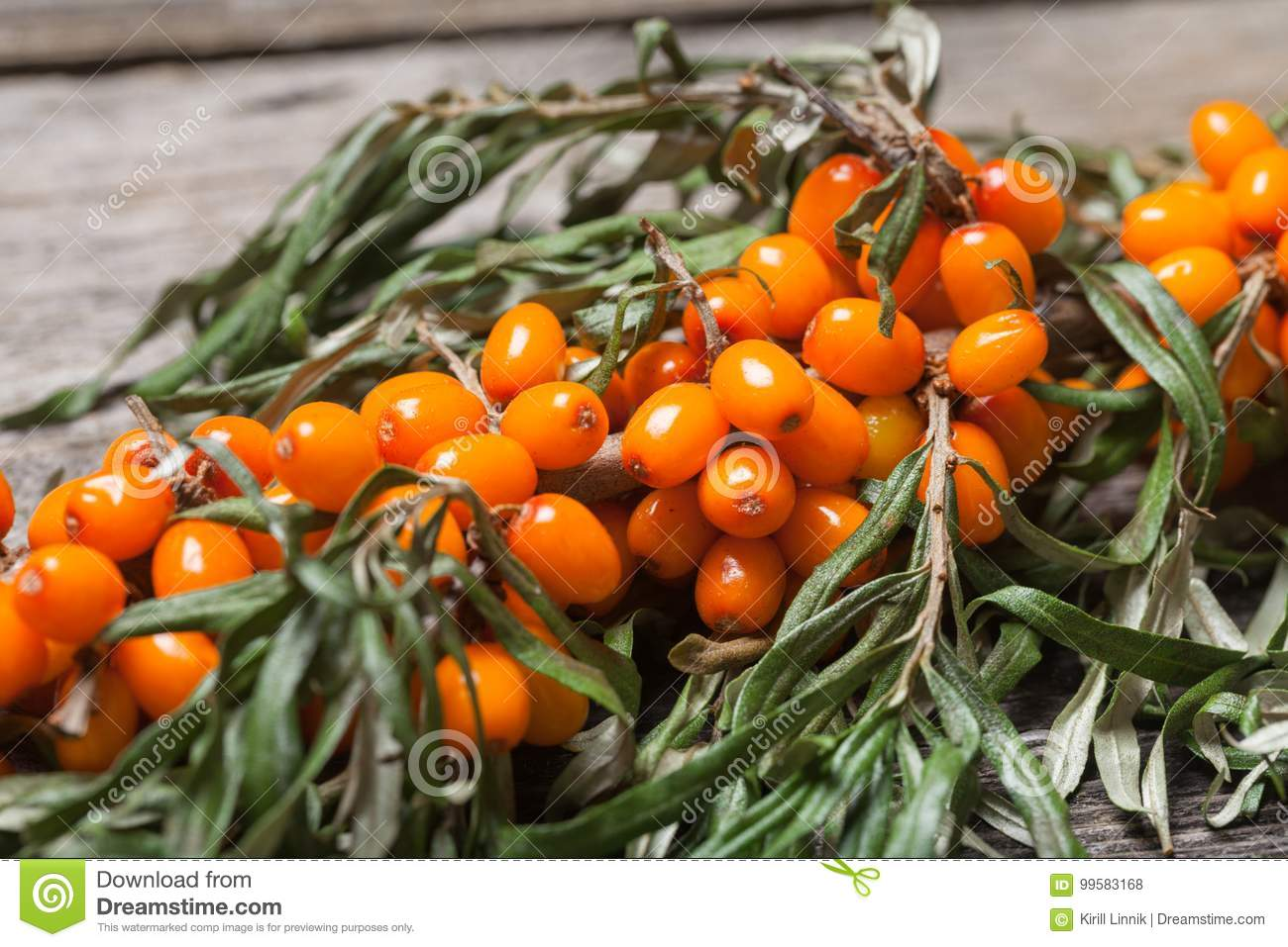 Download Fresh Seabuckthorn On The Table Stock Photo - Image of harvest, herbal: 99583168