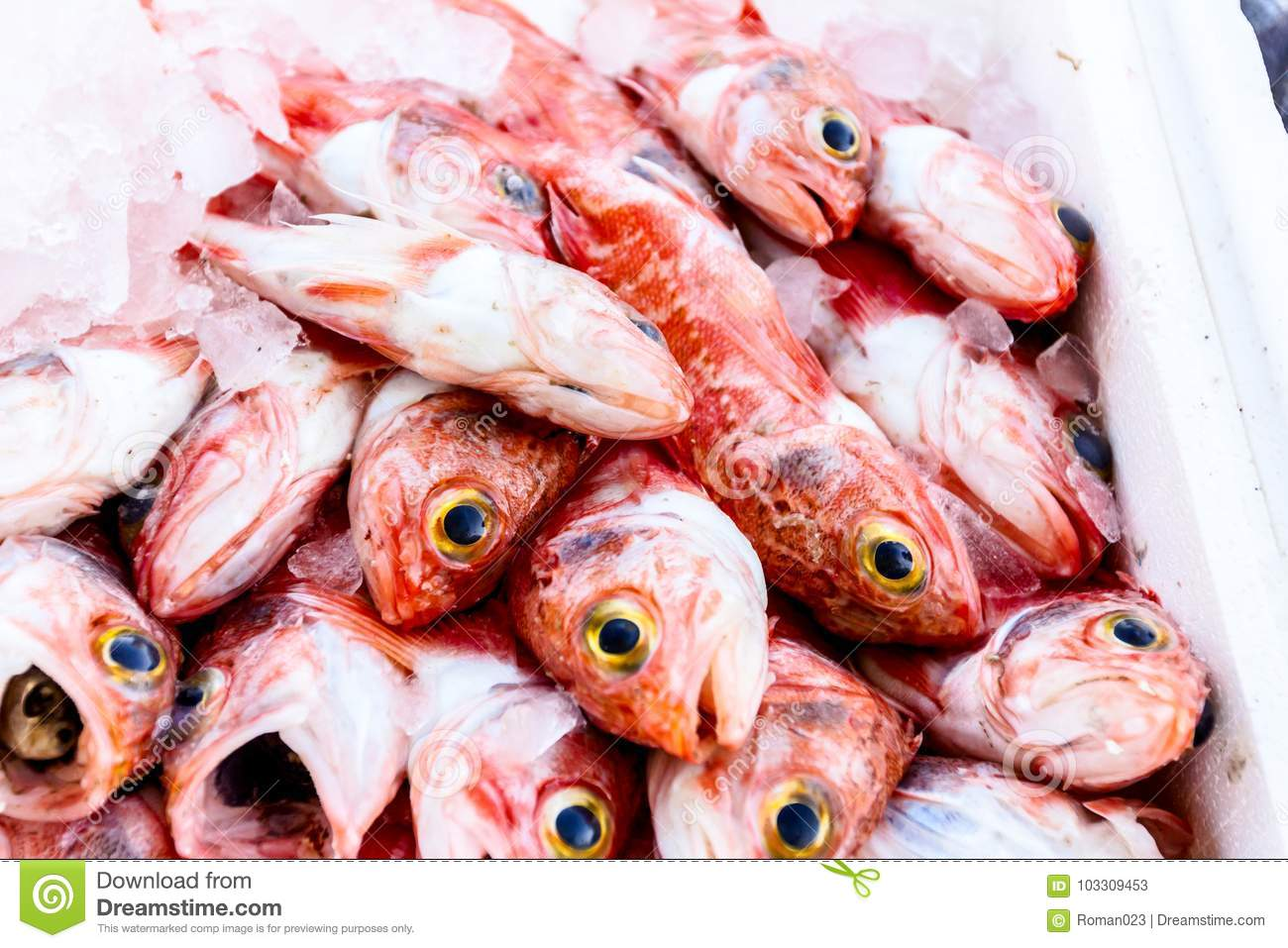 Fresh Seafood In Box With Ice At The Fish Market Stock Image - Image