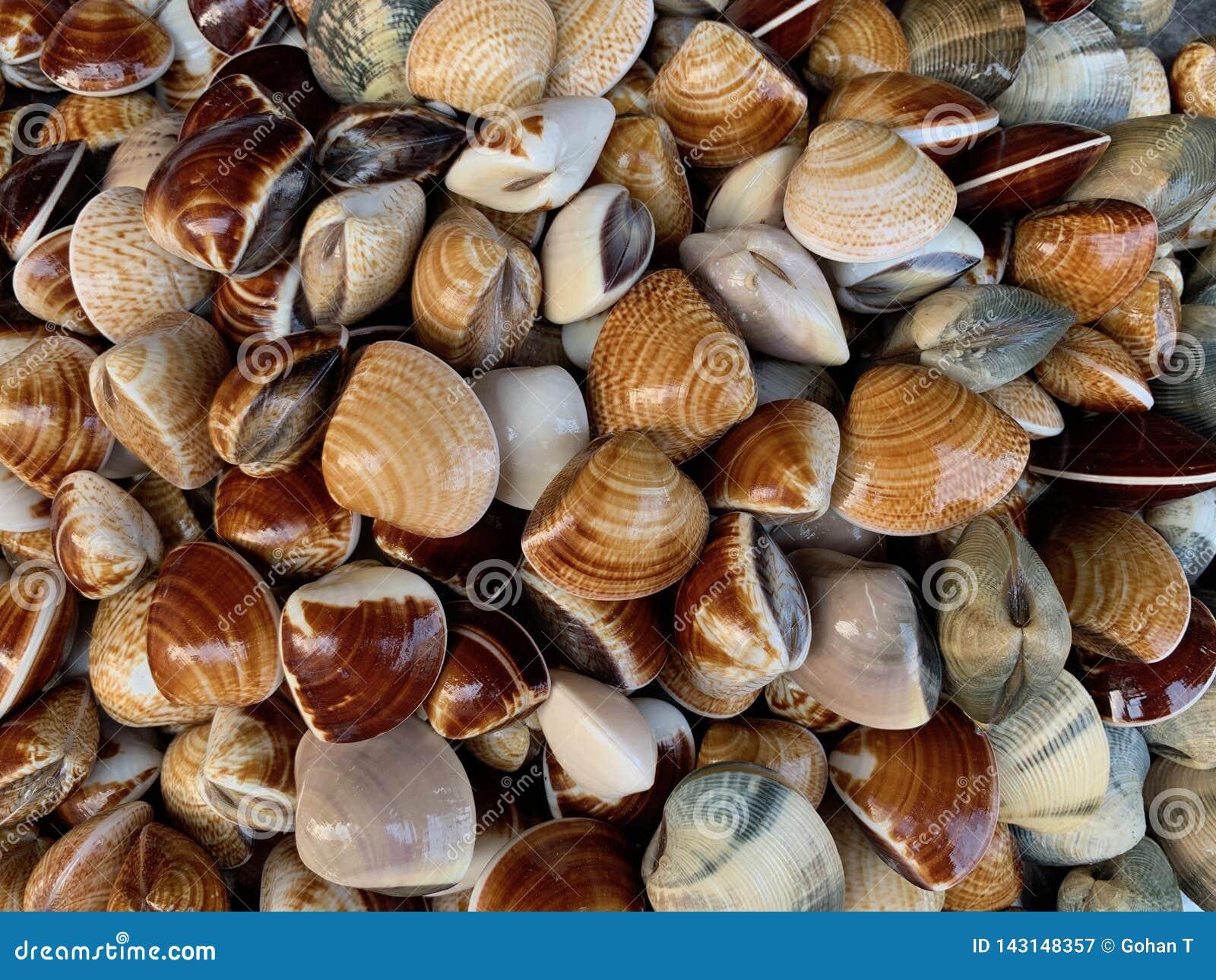 Fresh Shellfish as natural wallpaper and background, seafood