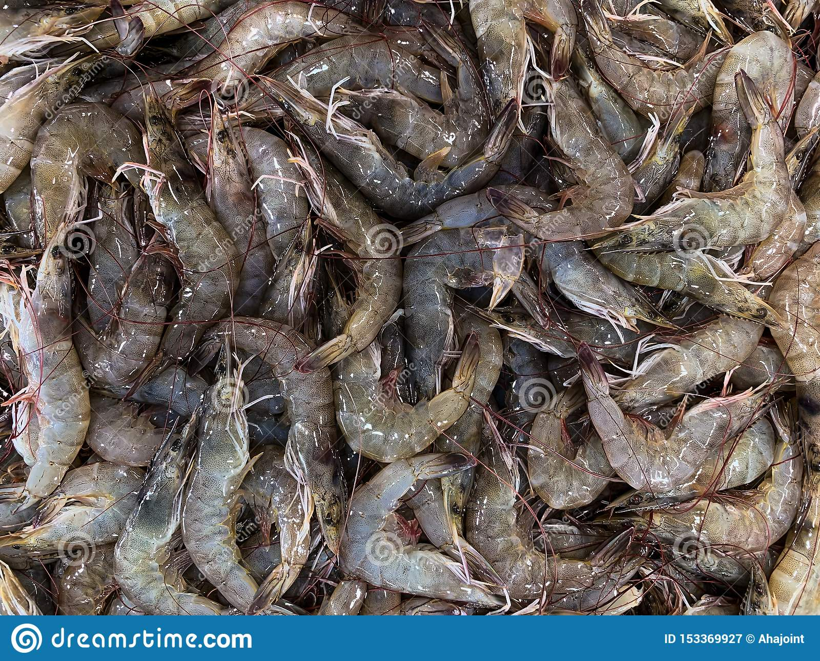 Fresh shrimp at the market for sell