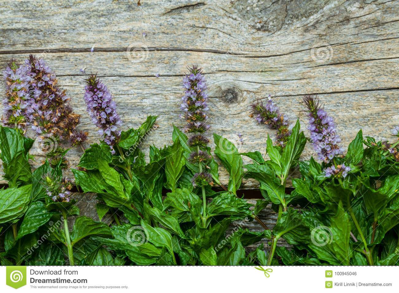 Download Spearmint on the table stock photo. Image of green, aromatic - 100945046