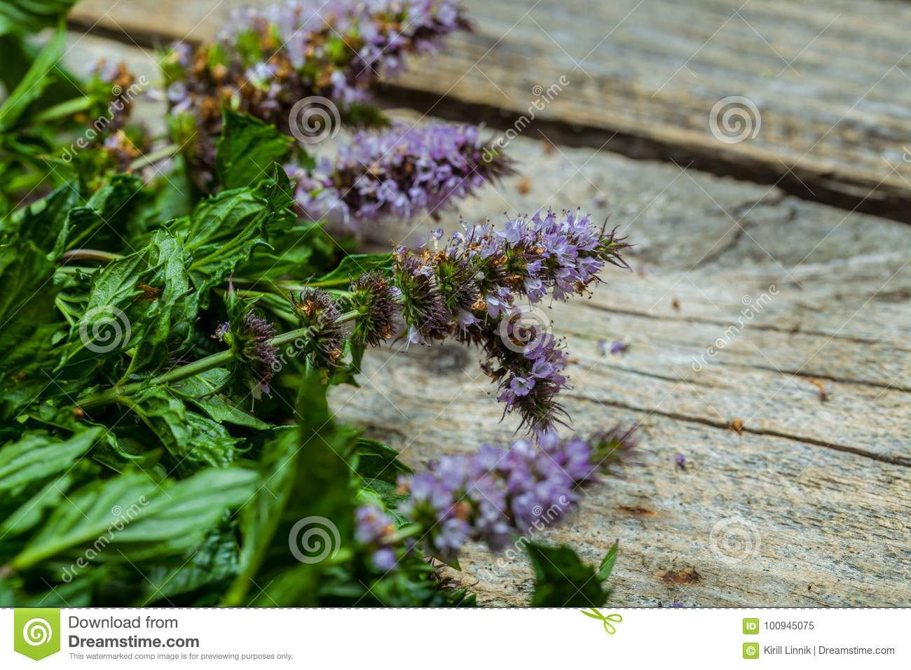 Download Spearmint on the table stock image. Image of healthy - 100945075