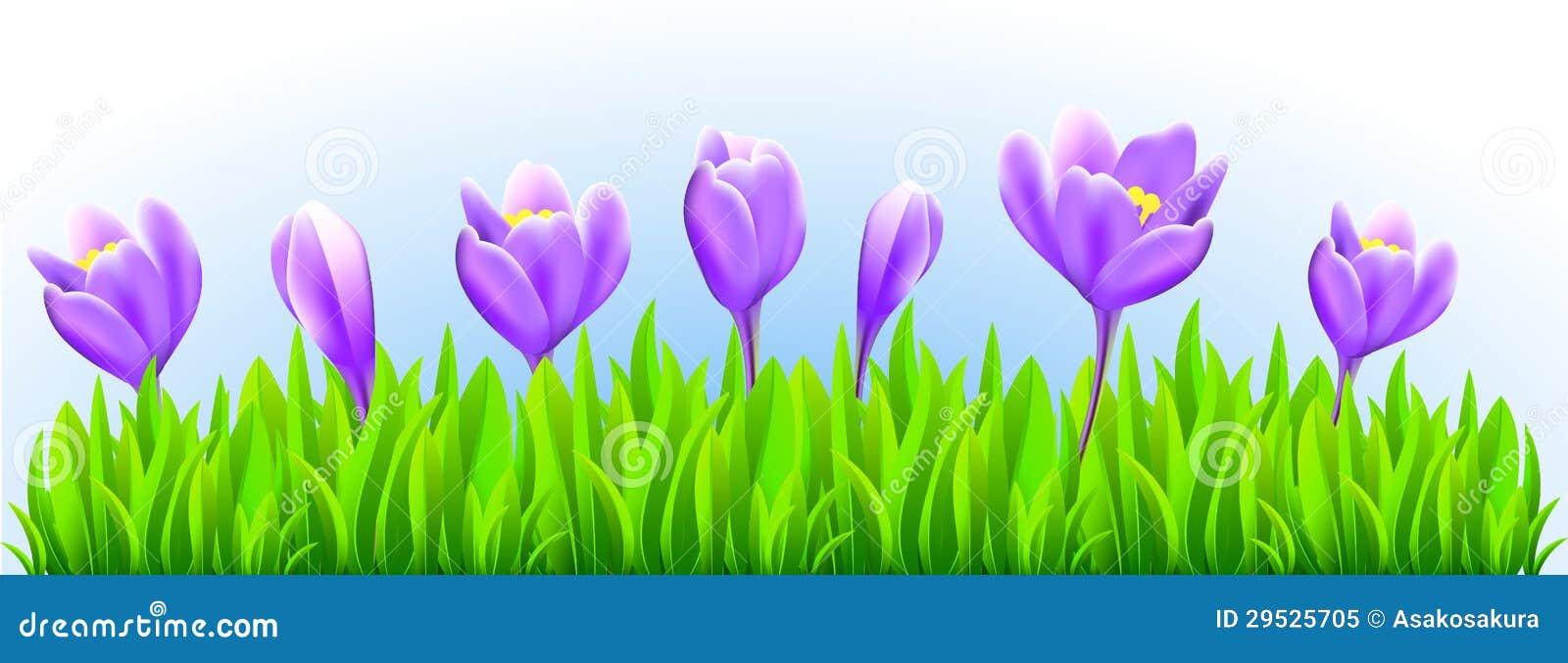 Fresh Spring Flower Border Stock Vector Illustration Of Land 29525705
