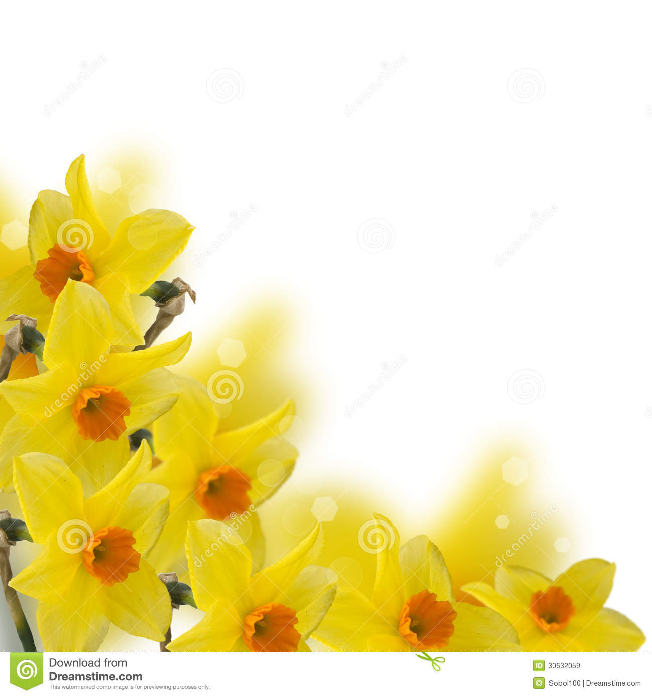 Fresh Spring Flowers Of Daffodils Stock Image Image Of Bloom