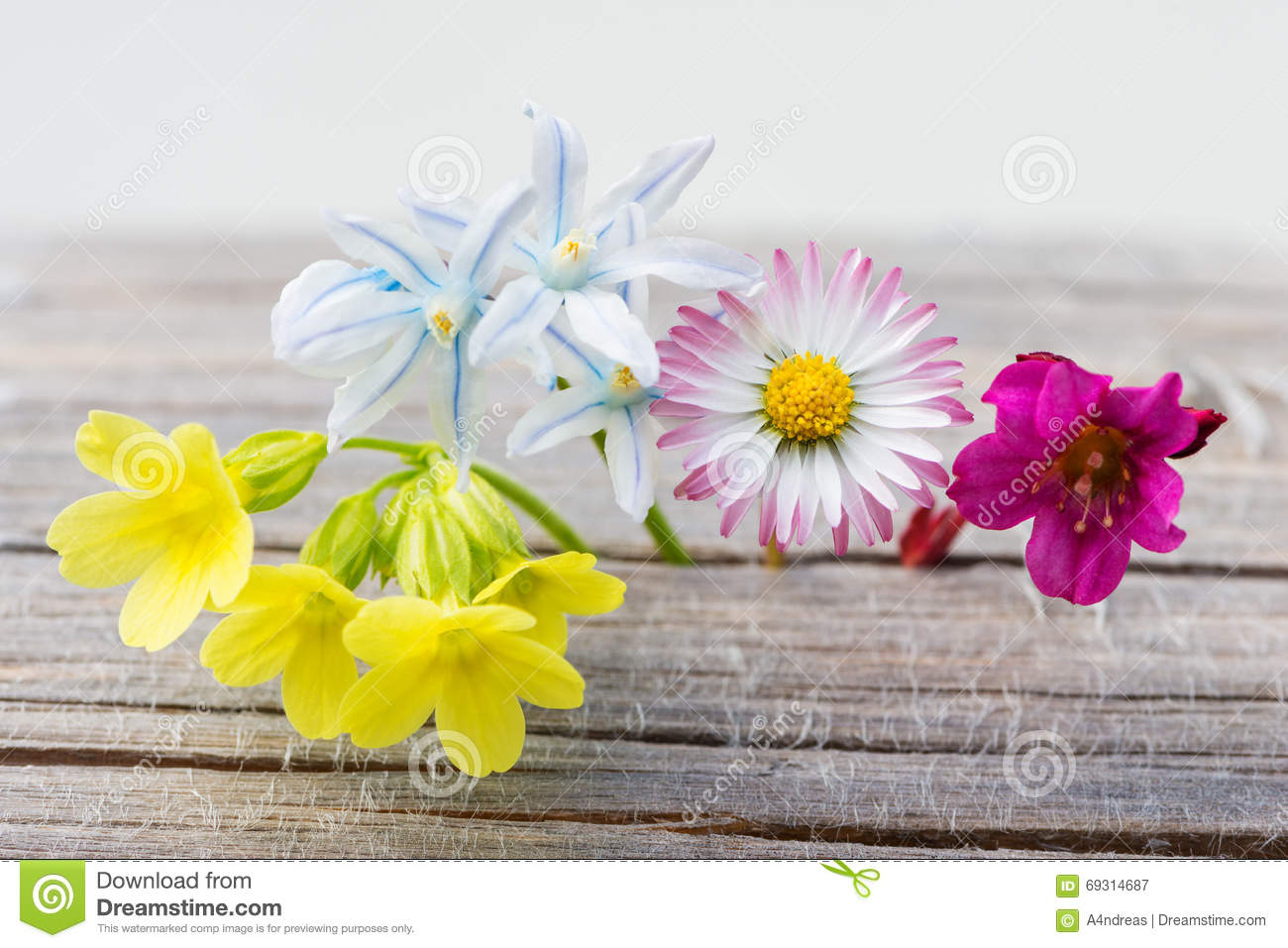 Fresh Spring Flowers On Wood Stock Image Image Of Blossom Flowers