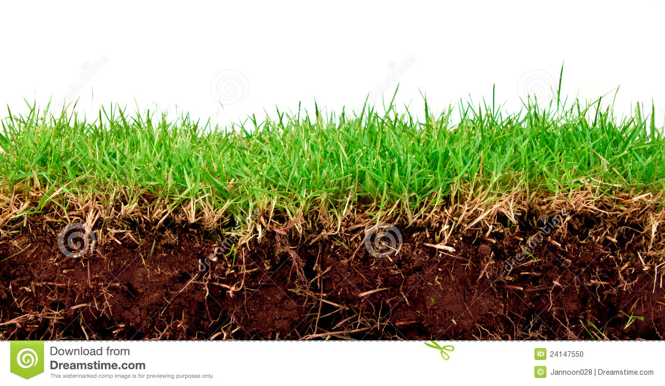 Fresh spring green grass with soil stock photo image for Soil and green