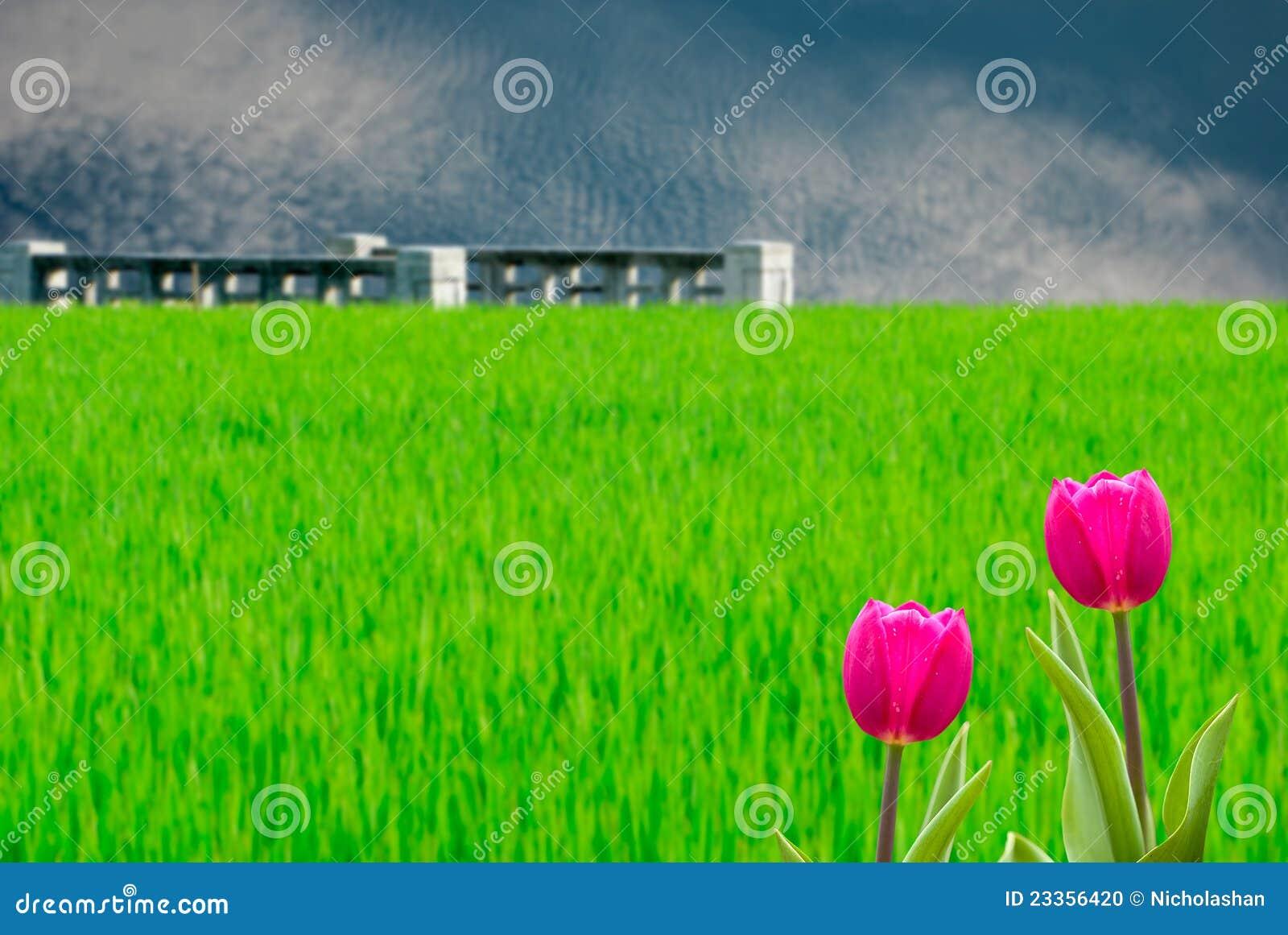 Fresh Spring Tulips With Nice BG Stock Photo