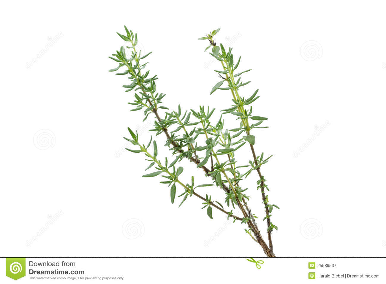 Fresh Thyme Herb Royalty Free Stock Photography - Image: 25589537: www.dreamstime.com/royalty-free-stock-photography-fresh-thyme-herb...