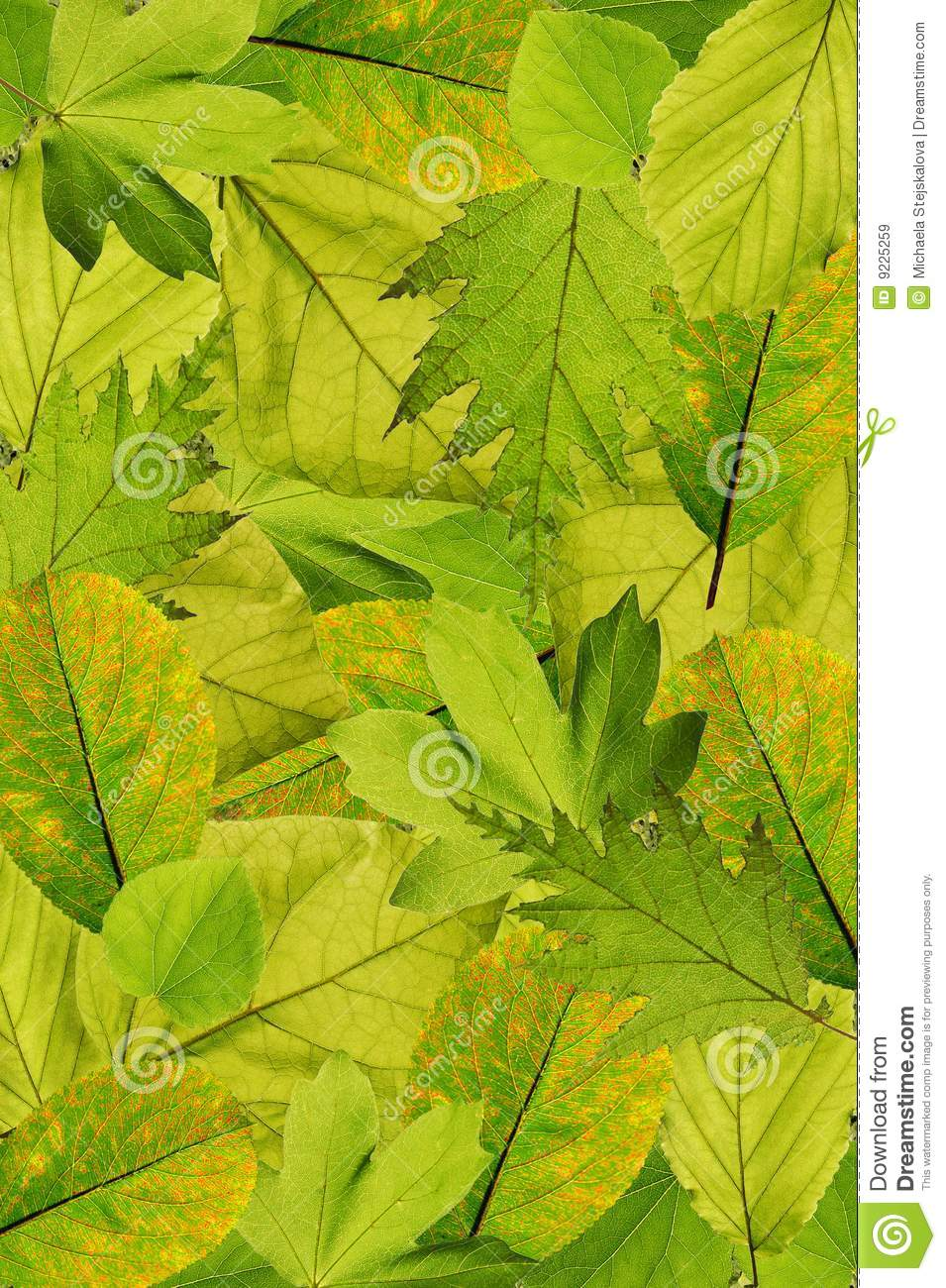 Fresh tree leaves background
