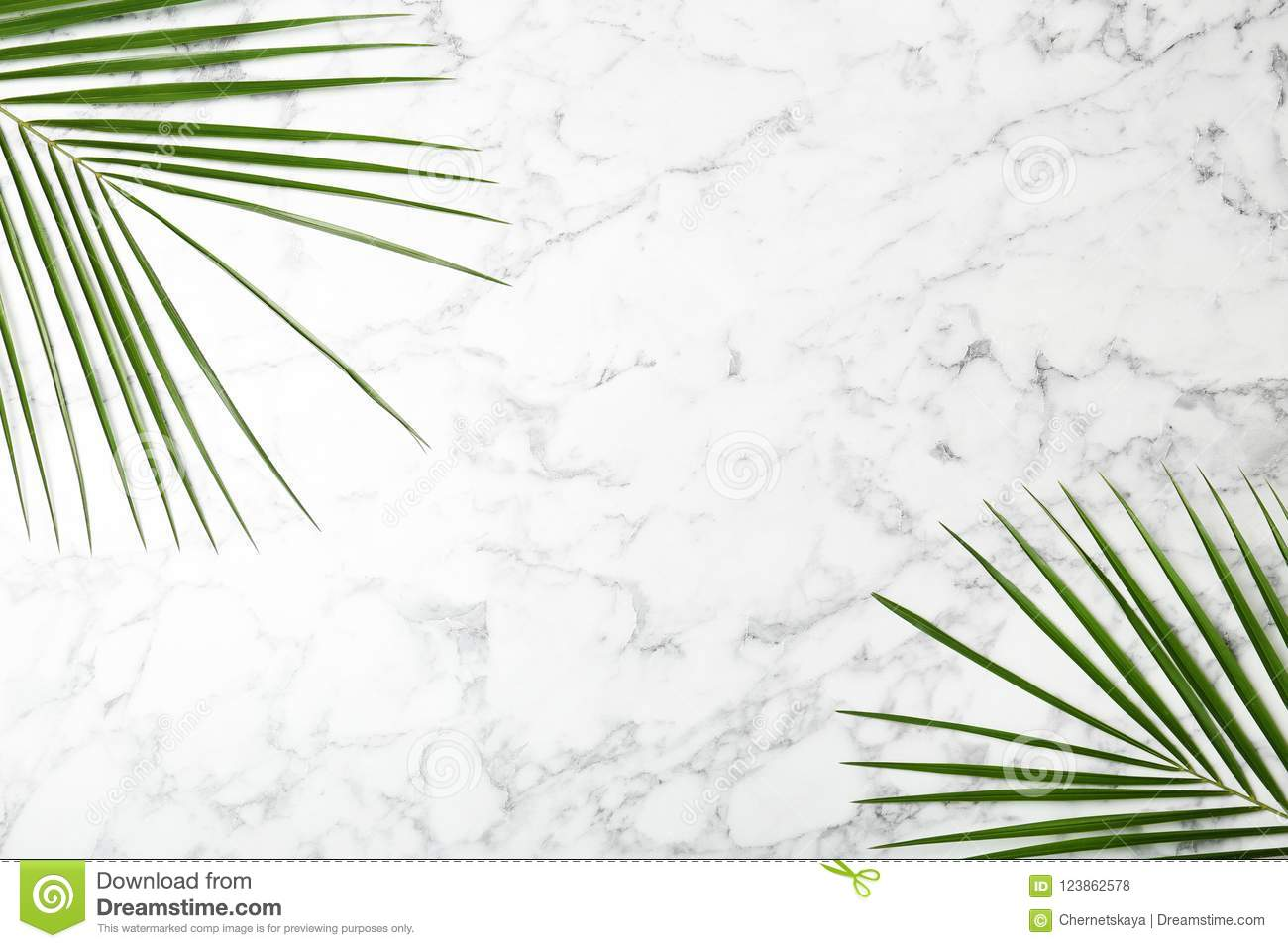 Fresh Tropical Date Palm Leaves Stock Photo Image Of