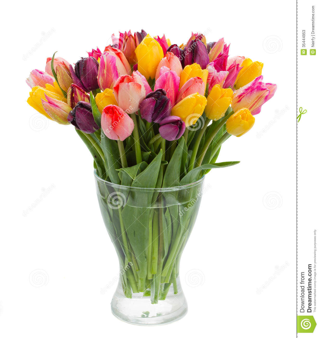 Vase of tulips gallery vases design picture fresh tulips in vase stock image image of flower color 35444953 fresh tulips in vase reviewsmspy reviewsmspy