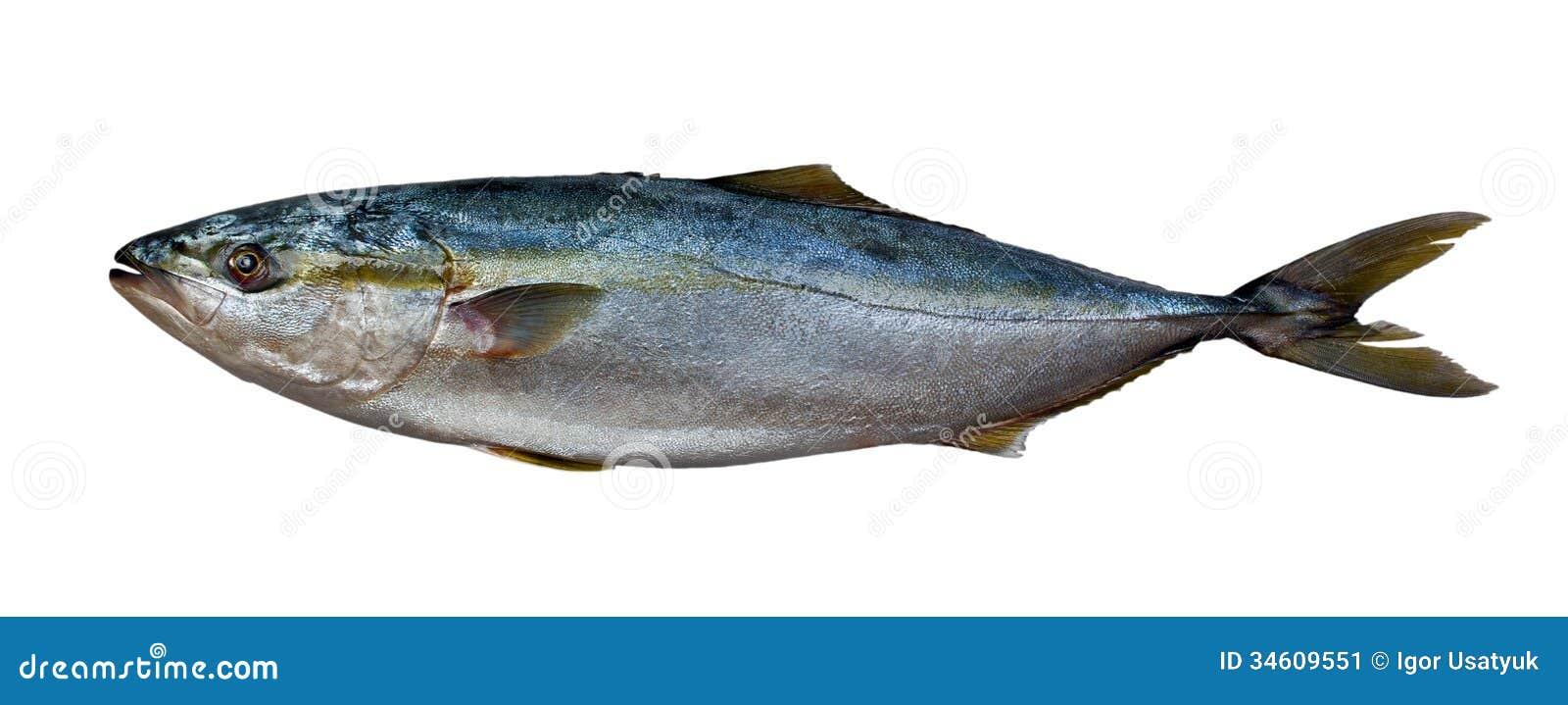 Fresh Tuna Fish...