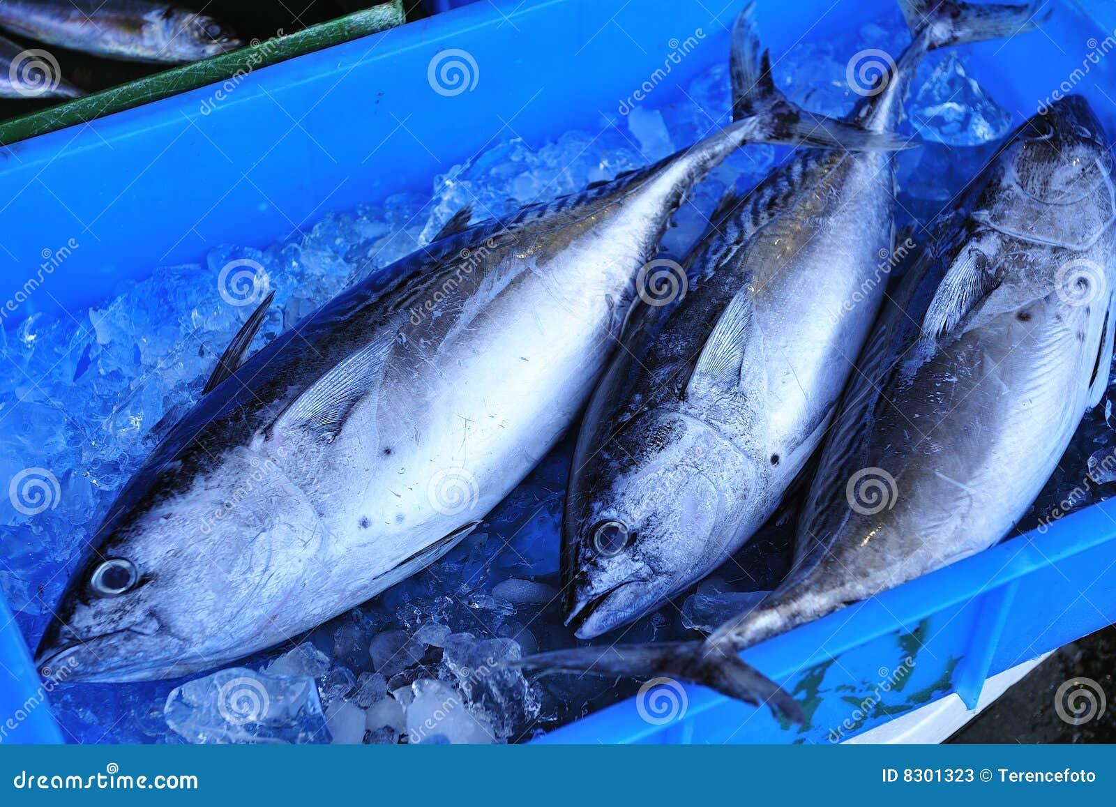 how to prepare fresh tuna