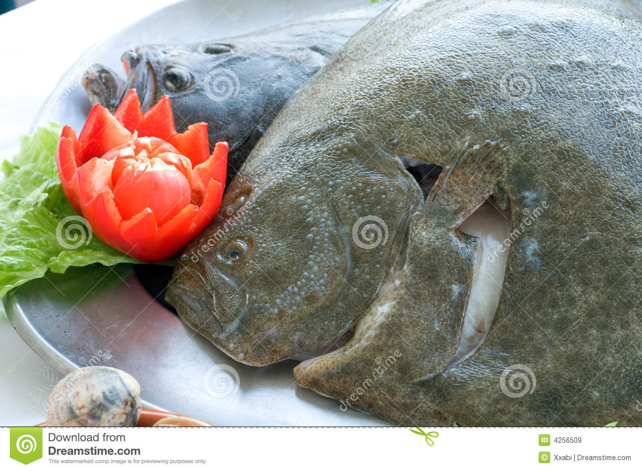Fresh turbot royalty free stock images image 4256509 for Turbot fish price