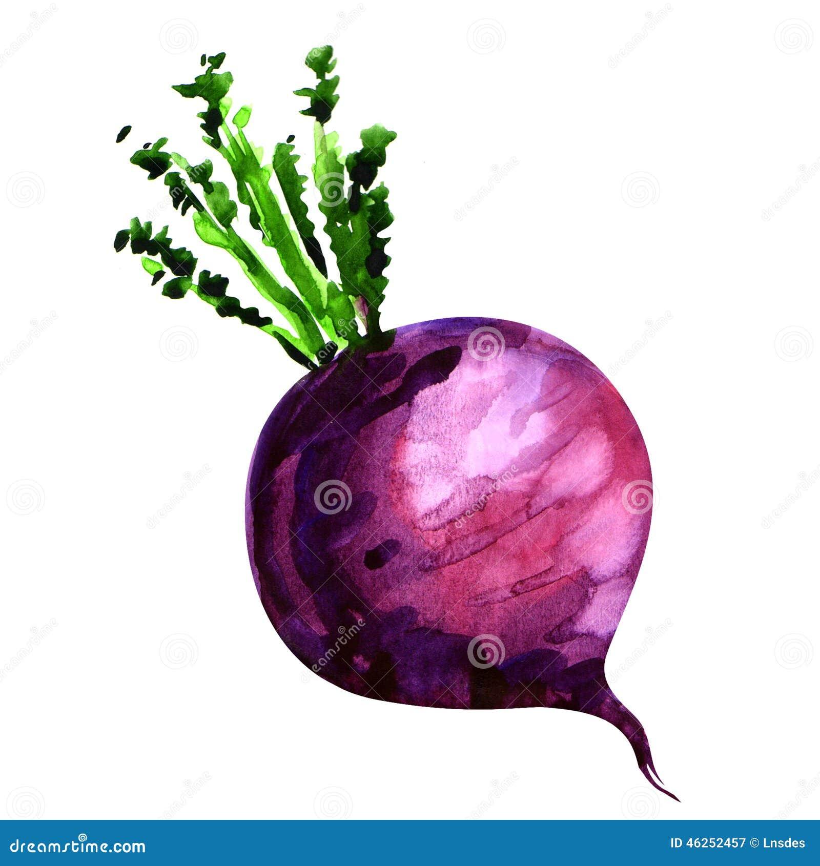 turnip stock illustrations 1 496 turnip stock illustrations rh dreamstime com turnip clipart images tulip outline clip art