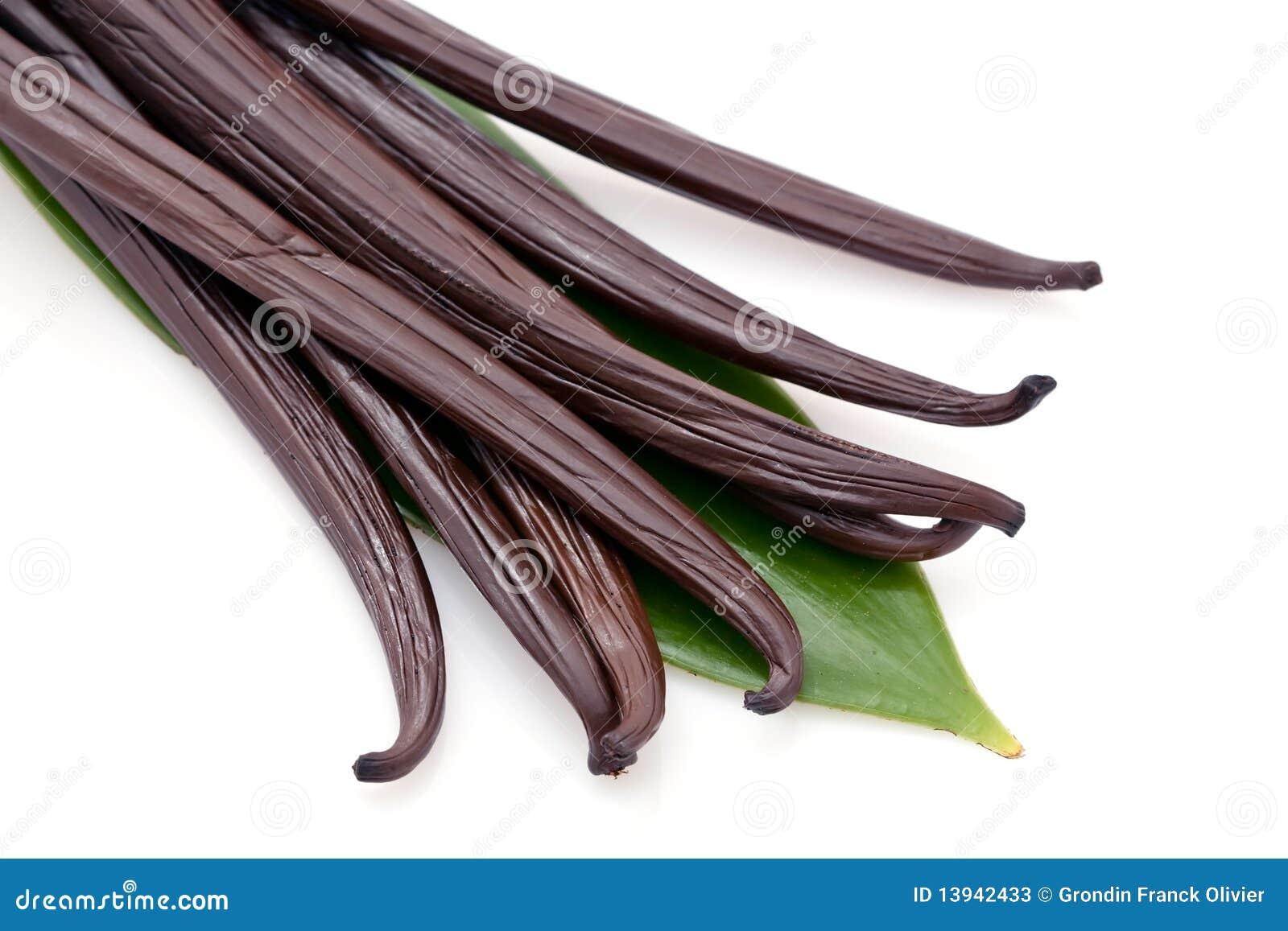 Fresh vanilla stock image. Image of green, life, plants