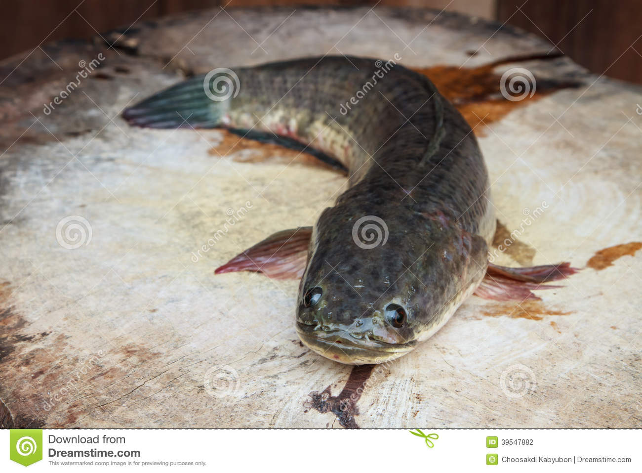 Fresh water fish stock photo image 39547882 for Is fish considered meat
