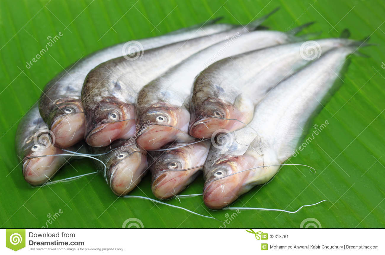 Fresh Water Pabda Fish Stock Image Image Of East