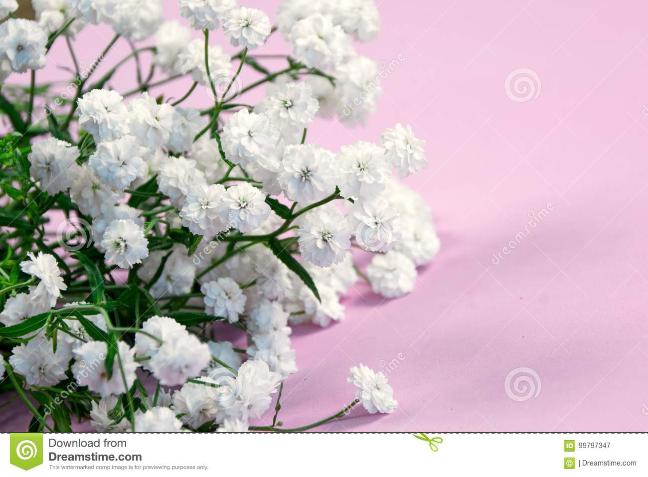 Fresh White Flowers On Pink Background Stock Image Image Of Mother