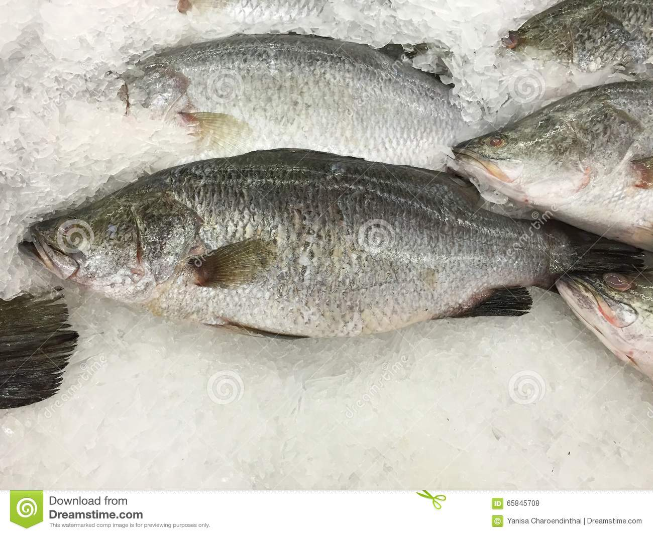 Fresh white perch fish on iced stall stock photo image for White perch fish