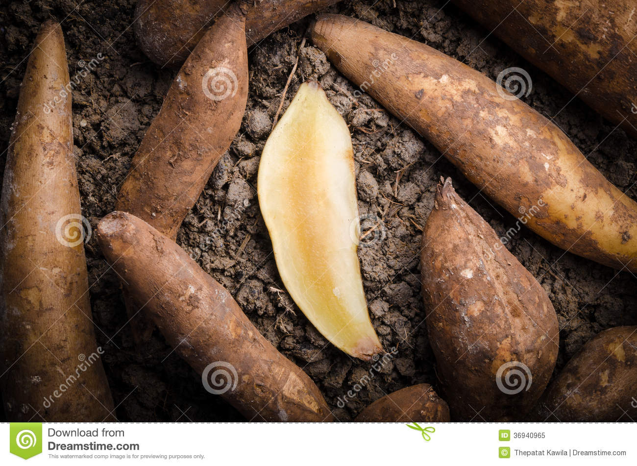 Fresh yacon root royalty free stock photo image 36940965 for Soil xat cut off