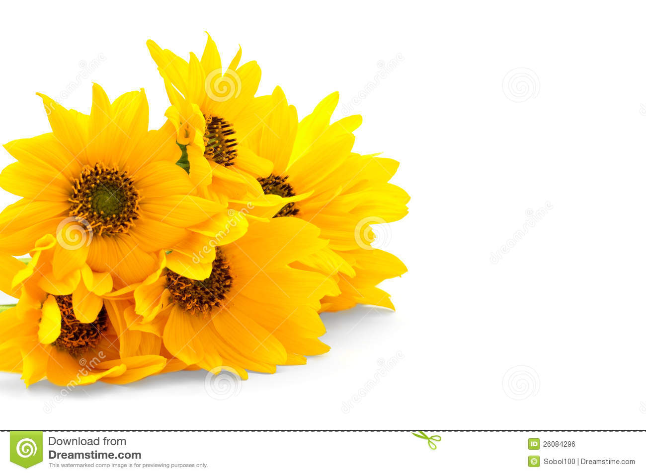 Fresh Yellow Flowers On White Background Stock Photo Image Of