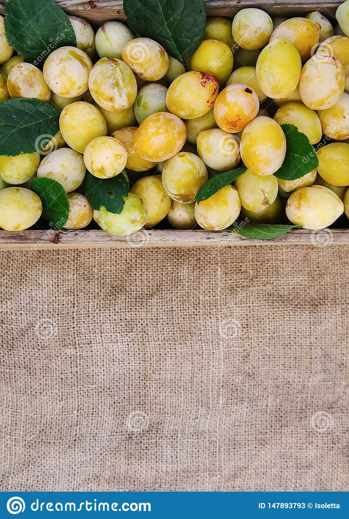 Fresh yellow plums. Ripe fruits in a wooden box on rough burlap surface