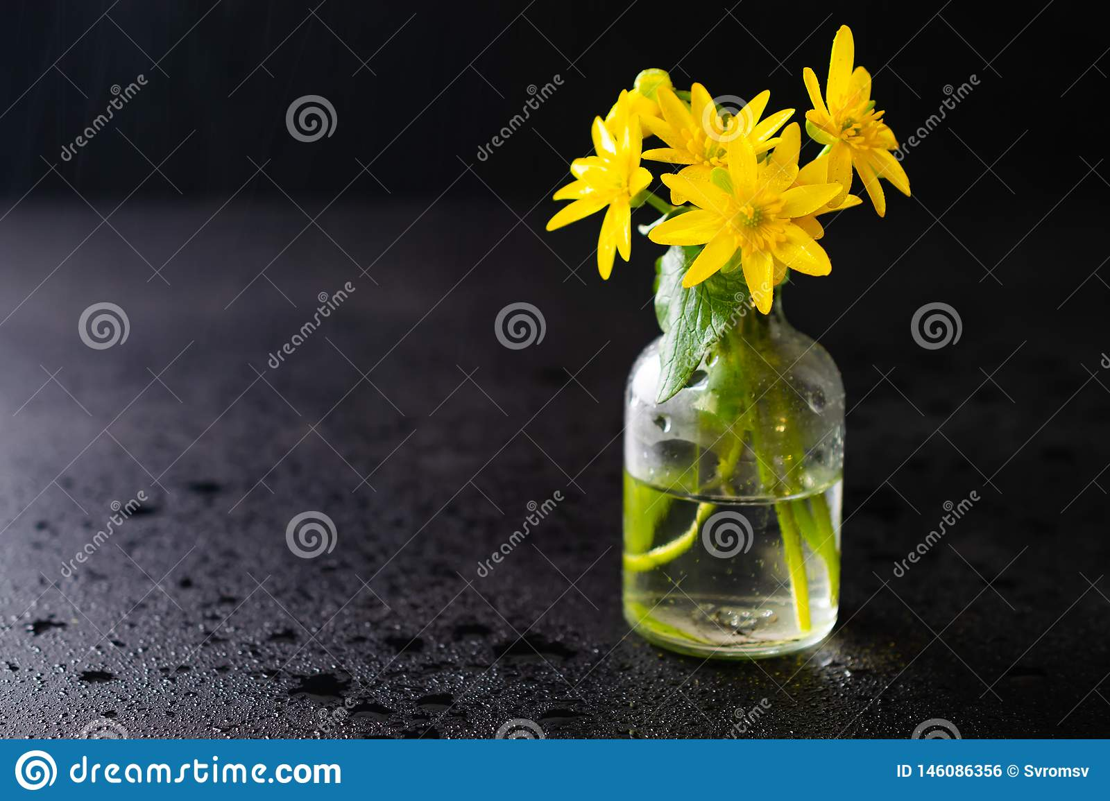 Fresh yellow spring flowers in a small glass bottle on a dark black background