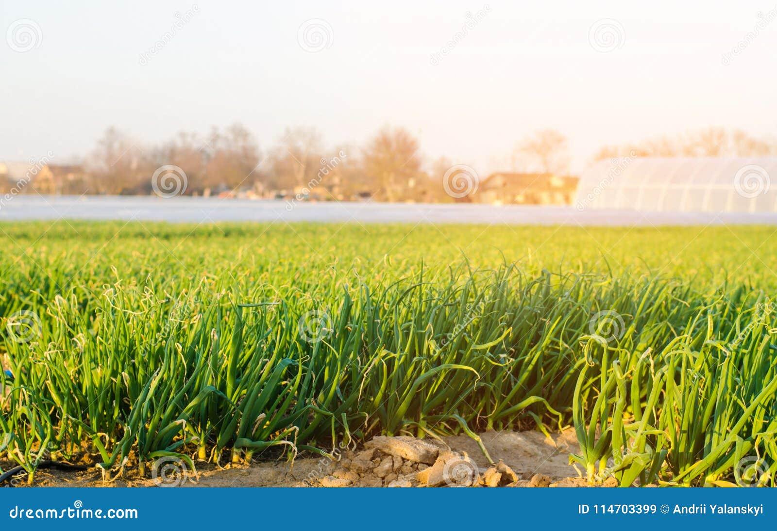 How to grow a good harvest 92