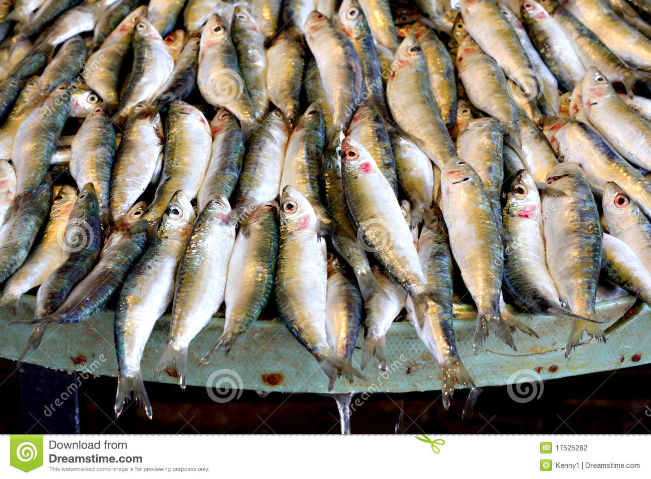 Freshly caught fish for sale stock photography image for Stock fish for sale
