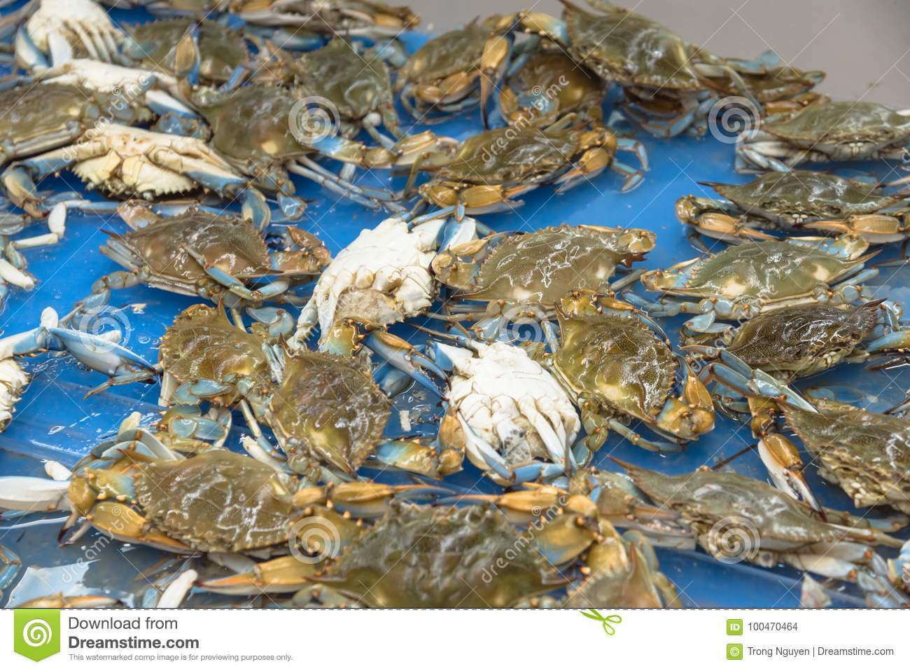 Live Slue Crabs At Supermarket In Houston, Texas, USA Stock