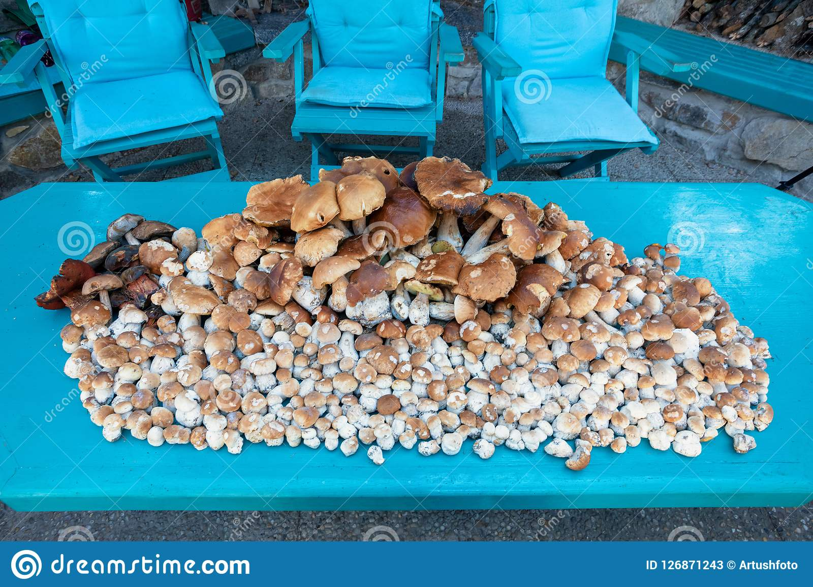 Collected mushrooms boletus in pile. Freshly collected mushrooms Boletus edulis in the forest in a pile Stock Photos