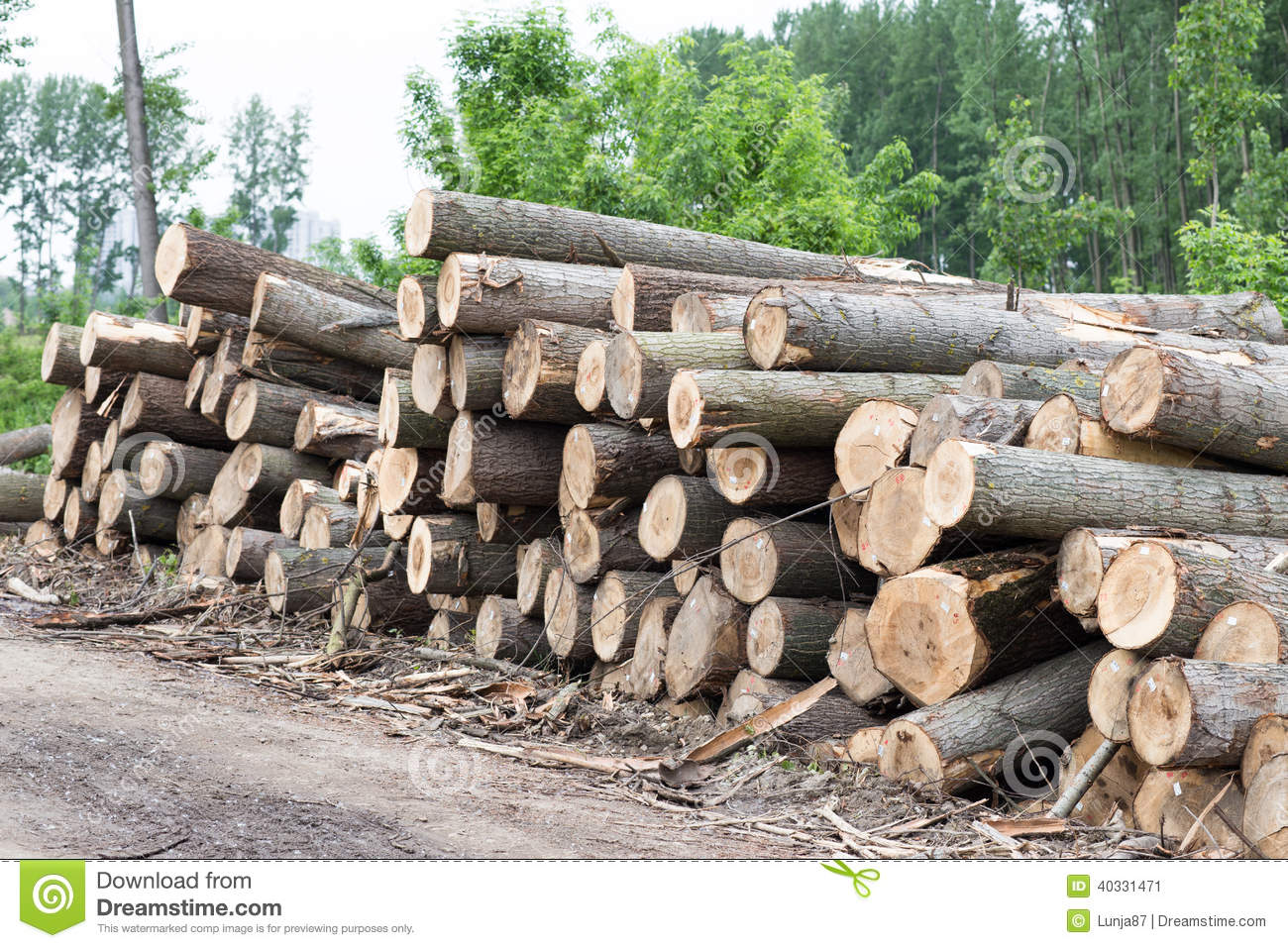 Freshly cut logs piled up royalty free stock photo for Tree log