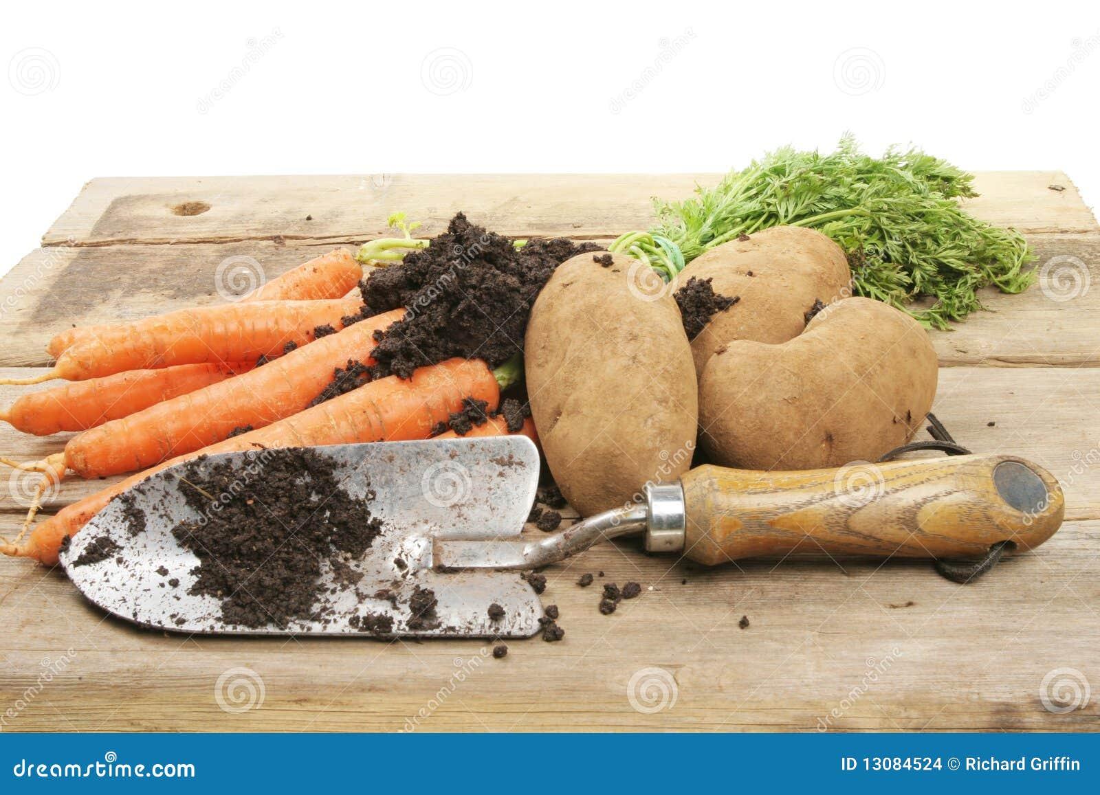 Freshly dug vegetables