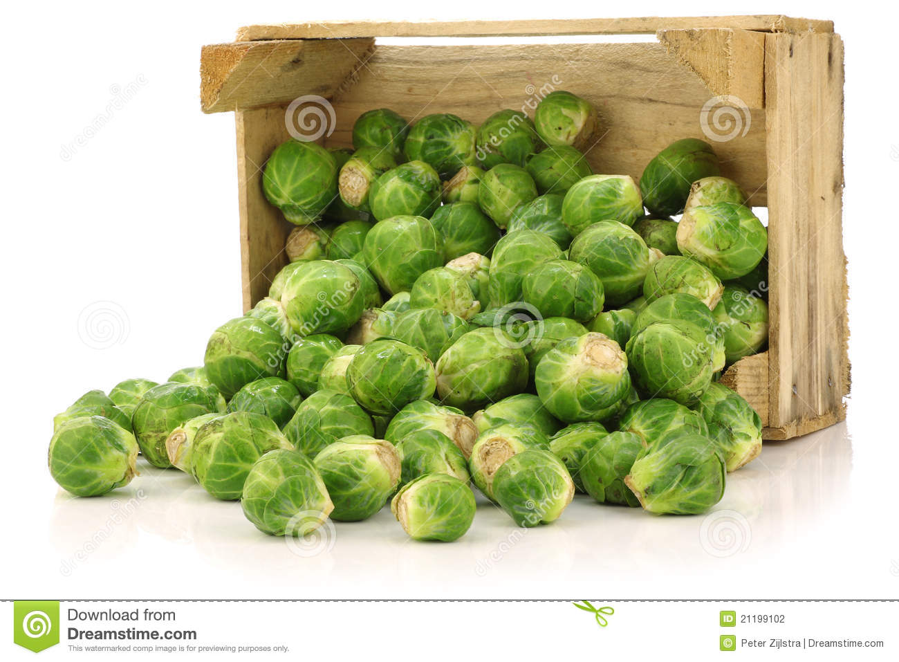Freshly harvested brussel sprouts