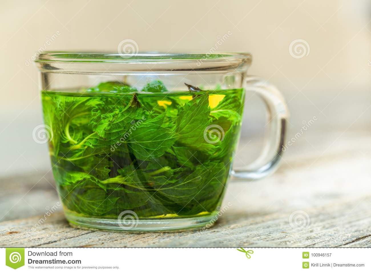 Download Mint tea on the table stock image. Image of green, detox - 100946157