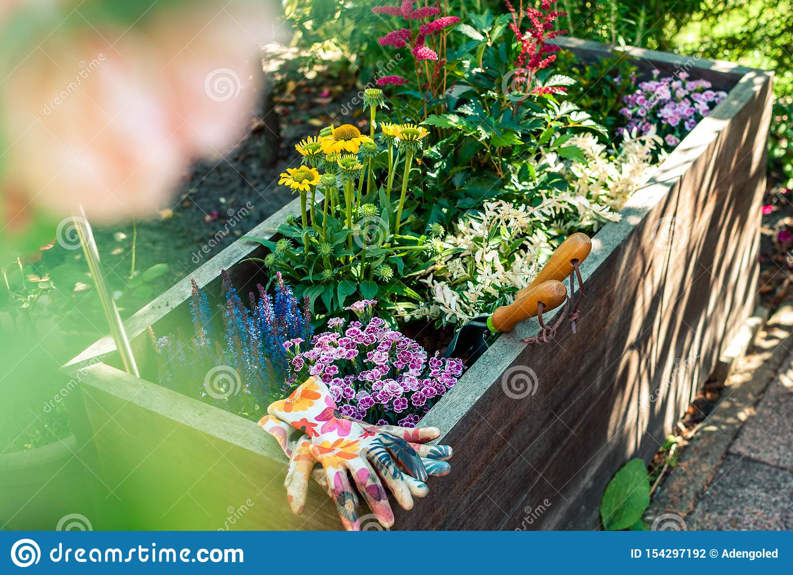 Freshly Planted Planter With Gardening Tools Planter Ideas Gardening Concept Stock Photo Image Of Echinacea Green 154297192