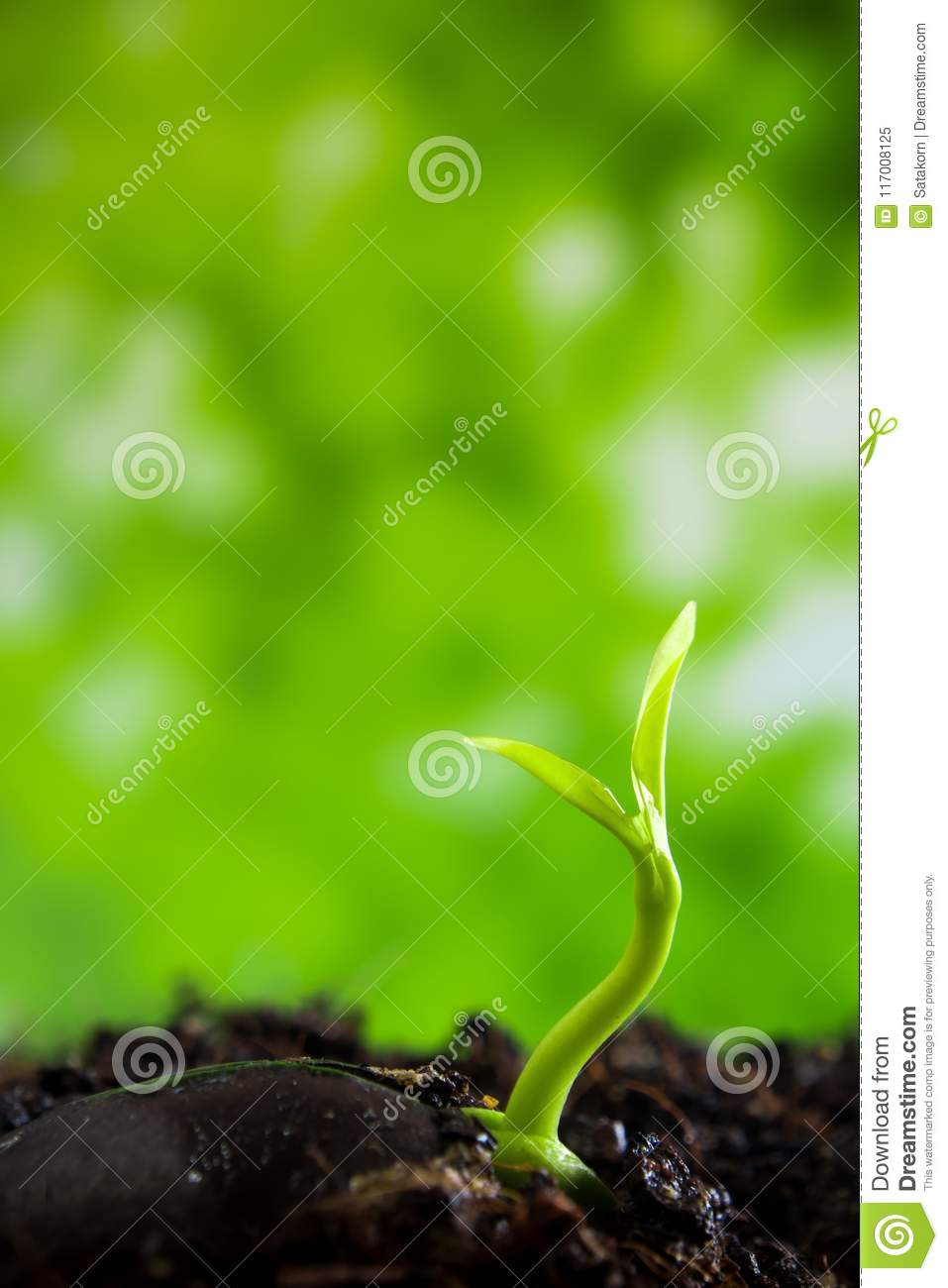 Freshness new life, leaves of young plant seedling in nature