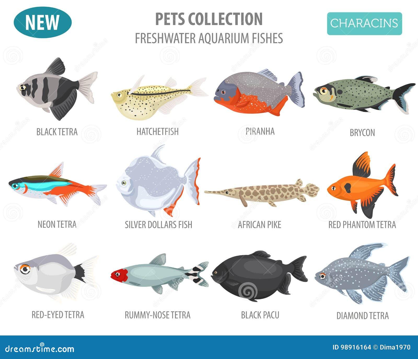 Freshwater Aquarium Fishes Breeds Icon Set Flat Style Isolated O