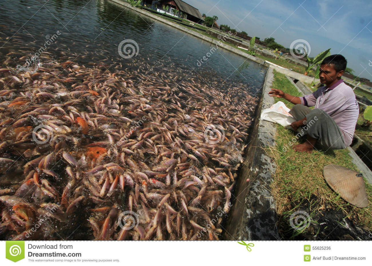 Freshwater Fish Breeders Editorial Photo Image Of Aged 55625236